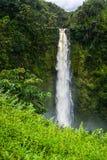 Automnes tropicaux Images libres de droits