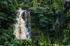 Automnes tropicaux 2 Photographie stock libre de droits
