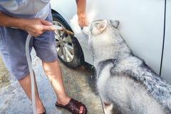 Automobile asiatica di lavaggio del giovane vicino al giardino domestico all'aperto mentre Siber Fotografie Stock