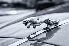 Automobile bollata Jaguar 420 dell'emblema Fotografie Stock Libere da Diritti