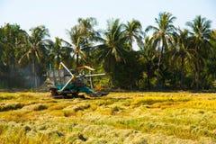 Automobile del raccolto nel giacimento del riso Immagine Stock