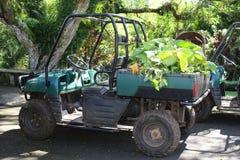 Automobile di manutenzione del giardino Fotografie Stock