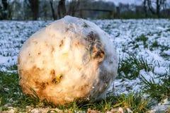 Automobile di modello bloccata nella palla gigante della neve fotografia stock