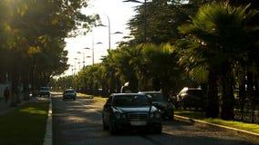 Automobile, die hinunter Hauptkopfsteinstraße mit Palmen in Batumi-Urlaubsstadt fahren stock footage