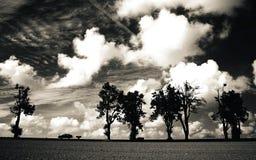 Automobile ed alberi isolati su una linea orizzontale contro il cielo drammatico Immagini Stock