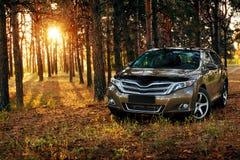 Automobile in foresta al tramonto Fotografia Stock