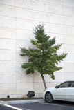 Automobile parcheggiata   Fotografia Stock
