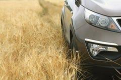 Automobile in un giacimento di grano Immagini Stock Libere da Diritti