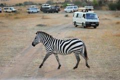 Automobili di safari, della zebra e dei turisti Fotografia Stock