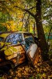 Automobili ed albero in un rottamaio Immagine Stock Libera da Diritti