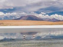 Autoreise in den Anden Stockfotos
