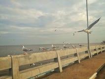 Autoridade do turismo de Swiftlet de Tailândia foto de stock