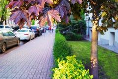 Autos parkten auf der Straße mit Rasen und Ahorn Lizenzfreie Stockfotografie