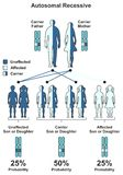 Autosomal Recessive Hereditary Trait Stock Photos
