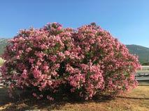 Autostrada kwiaty obrazy royalty free