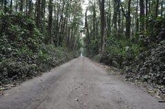 Autostrada na lesie Zdjęcia Royalty Free