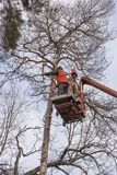 Autotower, élimination des arbres de secours Travailleurs sur des pièces pour éliminer le pin sec Photos stock