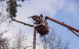Autotower, élimination des arbres de secours Travailleurs sur des pièces pour éliminer le pin sec Photos libres de droits