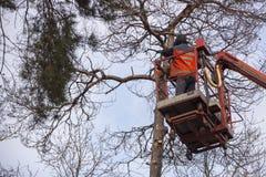 Autotower, élimination des arbres de secours Travailleurs sur des pièces pour éliminer le pin sec Image stock