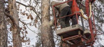 Autotower, élimination des arbres de secours Travailleurs sur des pièces pour éliminer le pin sec Images stock