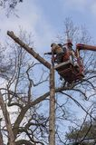 Autotower, αποβολή των δέντρων έκτακτης ανάγκης Εργαζόμενοι στα μέρη για να αποβάλει το ξηρό πεύκο στοκ φωτογραφία