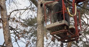 Autotower, eliminacja przeciwawaryjni drzewa Pracownicy na częściach eliminować suchej sosny zdjęcie royalty free