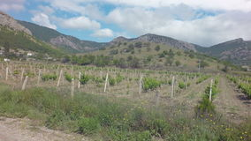 Autotravel Summer south of Crimea. Beautiful mountain landscape with vineyards. stock video