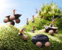 Autounfall an den Ameisenrennen, Ameisengeschichten Stockfotografie