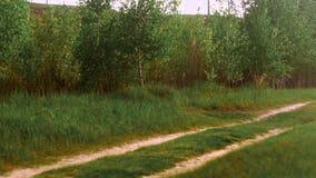 Autoweg in einem grünen Holz stock video