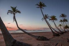 Australia beach. Australia Hamilton Island, palm trees, sea, sun, beach, nice sunsets. Should go there Royalty Free Stock Image
