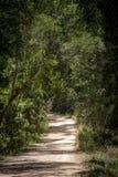 Autralian Bush väg Fotografering för Bildbyråer