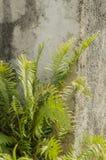 Autruche Fern By The Wall image libre de droits