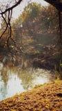 Auttumn в парке стоковое изображение