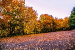 Autum与五颜六色的森林背景秋叶 免版税库存照片