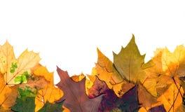 autum五颜六色的叶子 免版税图库摄影