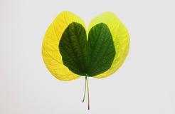 Autum叶子绿和黄色,乡情和爱标志 免版税库存图片