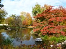 Autum在有leafes的一个公园上色树和灌木在地面,德国上 免版税库存图片