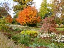 Autum在有leafes的一个公园上色树和灌木在地面,德国上 免版税库存照片