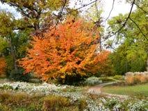 Autum在有leafes的一个公园上色树和灌木在地面,德国上 库存图片