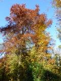 Autum在有leafes的一个公园上色树在地面,德国上 免版税库存照片