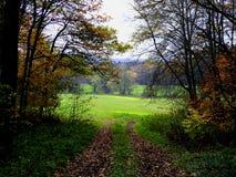 Autum森林和fieild背景与五颜六色秋叶 免版税图库摄影