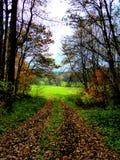 Autum森林和fieild背景与五颜六色秋叶 图库摄影