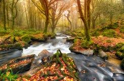 Autum森林河 免版税库存照片
