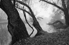 Autum河与树和morming的薄雾的b&w风景 库存图片