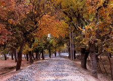 Autum. Seen of autum in kashmir Stock Photo