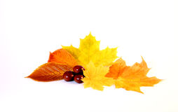 autum Images stock
