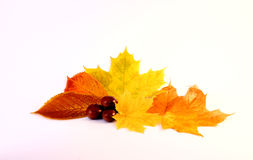 autum Image stock