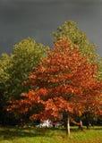 Autum Bäume mit Sturmwolken Lizenzfreies Stockbild