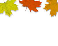 Autum Background. With colorful fall leaves falling down from tree royalty free stock photo