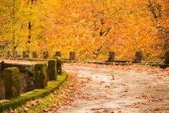 Free Autum Background Bridge And Yellow Tree Leaves In Village Zgara Stock Photos - 104202173